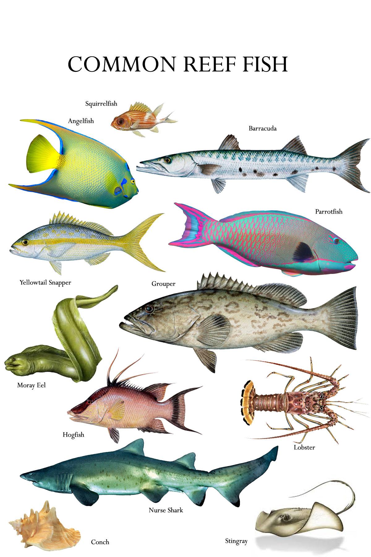 Islamorada Fish Company Restaurant San Antonio 5